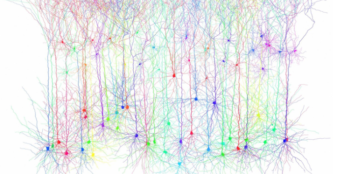 Connectomics by Knowing Neurons
