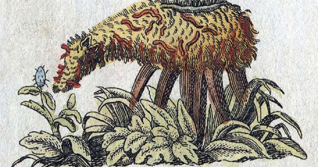 Bertuch-vegetal-Lamb