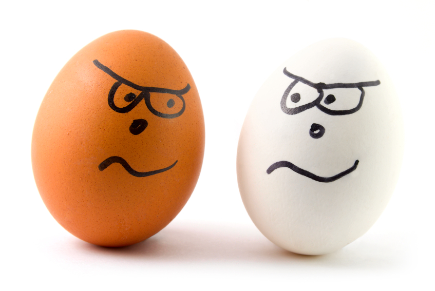 different eggs are arguing