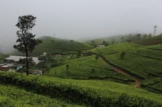 SriLanka_Blog1_034