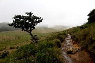 Blog0716-SriLanka-IMG_2983b