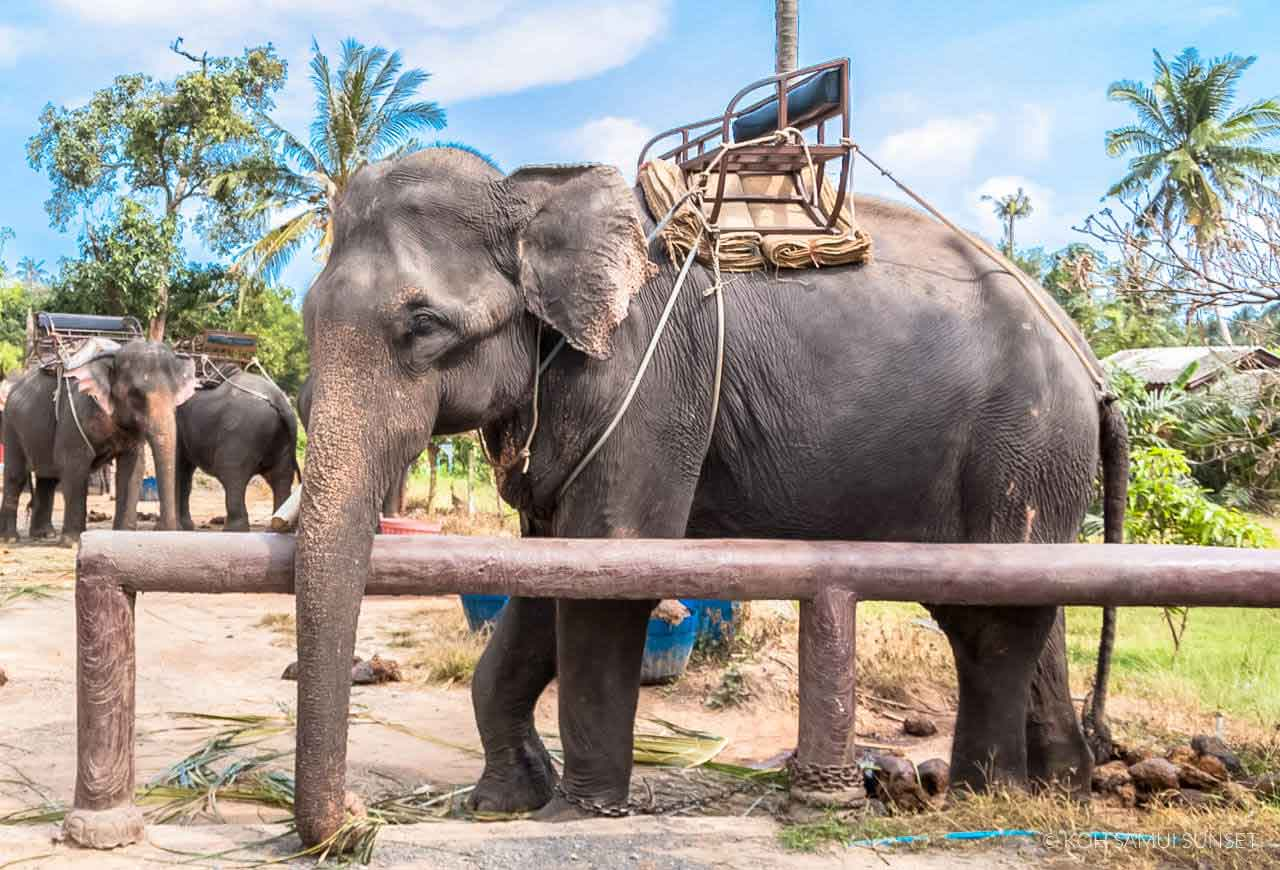 Photos éléphants Elephants In Thailand 4 Things You Must Know About Elephants In