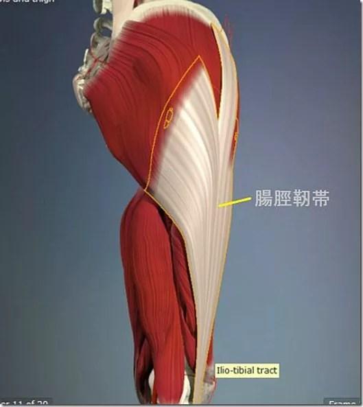 股関節痛み原因治療 腸脛靭帯2