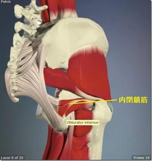 股関節痛み原因治療 内閉鎖筋4.5