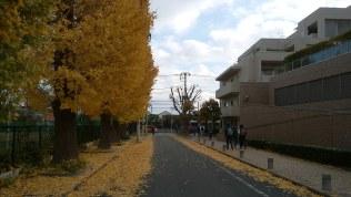 成城銀杏並木