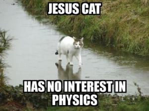 Jesus-Katze