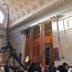 子連れニューヨーク アメリカ自然史博物館