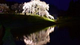 中島の地蔵桜2016(二本松市、旧東和町)LEDライトアップ