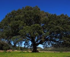 木へんに南でなんと読む