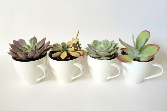 kraftmint_cupofsucculents_features