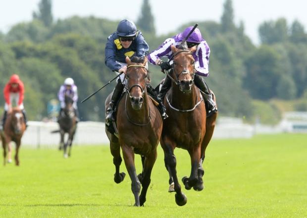 horse race at York