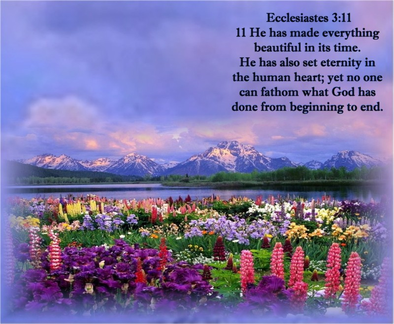 Free Desktop Wallpaper Scripture Fall Ecclesiastes 3 11 Kjv Kristi Ann S Haven