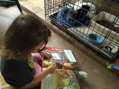 Seren reads to the foster kittens