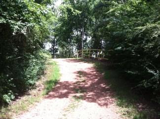 The trail again