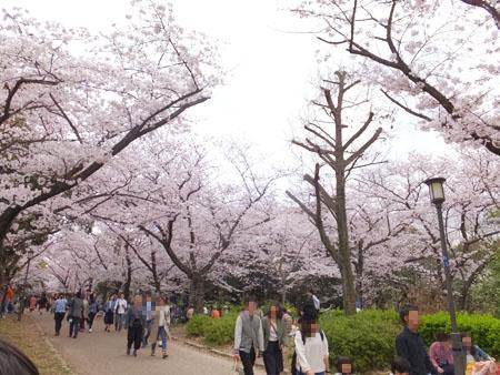 大阪城公園 桜 見どころ