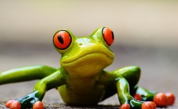 frog-927765_640