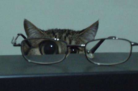 catglasses via www.pophangover.com