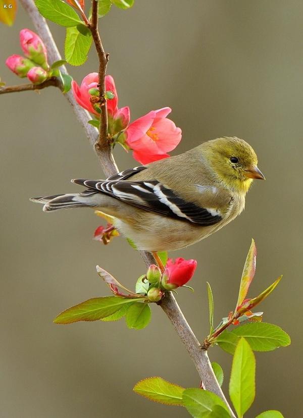 Ali 3d Name Wallpaper Free Download Birds Picture Bird Wallpaper Bird Photography Birds