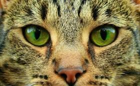 Nowa ustawa o ochronie zwierząt