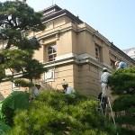 京都府庁剪定工事ボランティア at 京都府庁 旧本館北側のマツ