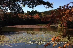 Garden pond in the fall, Kyoto