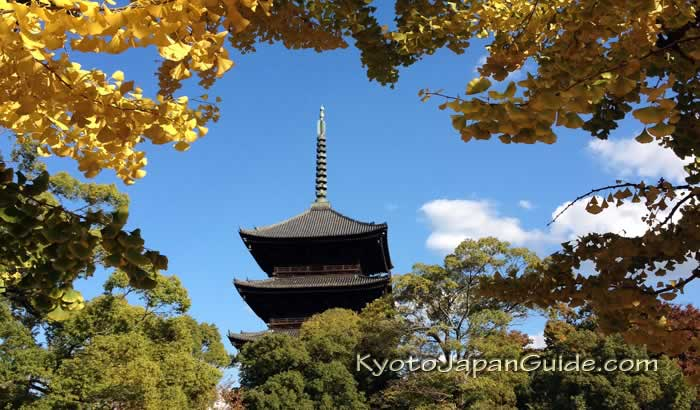 Golden ginko leaves at Toji Temple