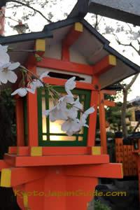 Lamp and sakura at Tatsumi-daimyojin 007