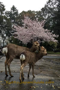 2 Deer in Nara 011