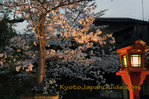 Cherry blossoms and lamp Gion Kyoto 091