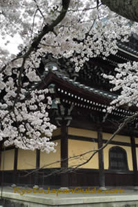 Cherry blossoms at Nanzen-ji Temple 039