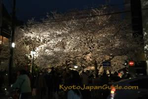 Gion District sakura night time 007