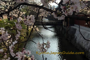 Gion stream and cherry blossoms 013