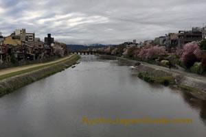 Kamagawa River Kyoto with Sakura 005