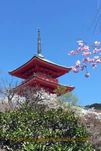 Pagoda and sakura at Kiyomizu-dera Temple 059
