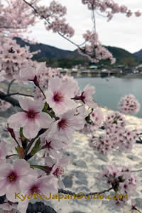 Sakura 0n Arashiyama Bridge 041