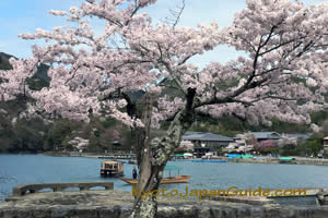 Sakura Boats River in Arashiyama 053