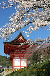 Sakura and red temple hall 043