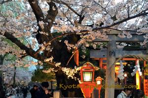 Tatsumi-jinja Shrine Gion sakura 089