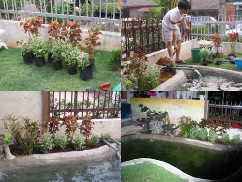 koi pond with garden