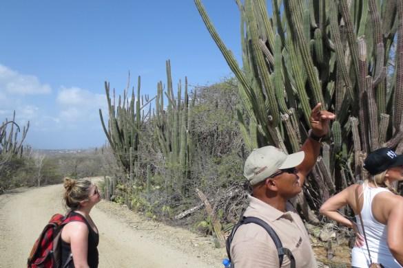 Randonnée dans le parc national Arikok avec le guide surnommé Rambo à cause de sa grande force et de son passé militaire. Ce fier descendant des amérindiens Arawak est un homme fascinant. (Photo: Benoit Legault)