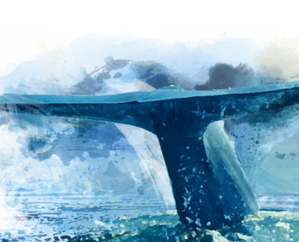 La baleine bleue au ROM.