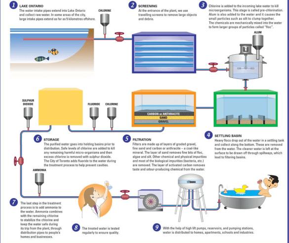 Infographie de TorontoWater, expliquant le processus d'épuration de l'eau.