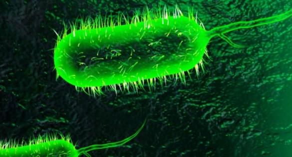 La bactérie Vibrio cholerae: vibrion cholérique ou bacille virgule. (Photo: http://bit.ly/2qIUi7W)