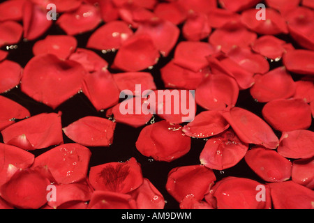Red rose petals floating on water this represents traditional south