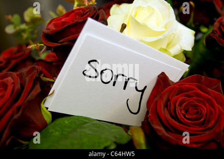 Sorry card with red rose Stock Photo 58425407 - Alamy - apology card messages