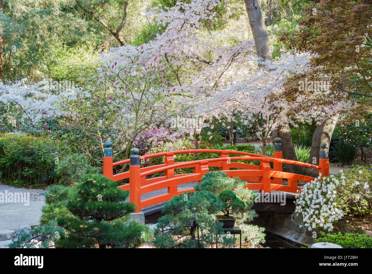 cherry blossom at japanese garden of descanso garden los angeles download