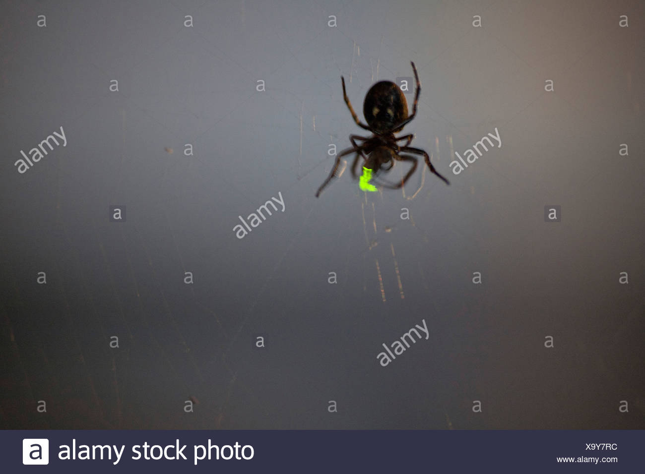 Firefly Insect At Night Glowing Fireflies Stock Photos And Glowing Fireflies Stock
