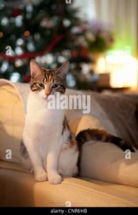 Animal Attitude Stock Photos & Animal Attitude Stock