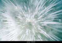 Ice Cave Ceiling Stock Photos & Ice Cave Ceiling Stock ...