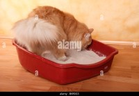 Litter Tray Stock Photos & Litter Tray Stock Images - Alamy
